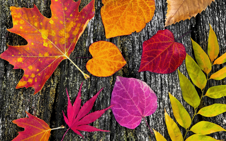 красивые картинки разных листьев тем
